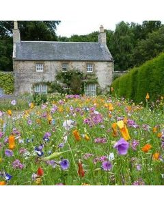 Amvista Clarence Low Height Pure Wildflower Mix